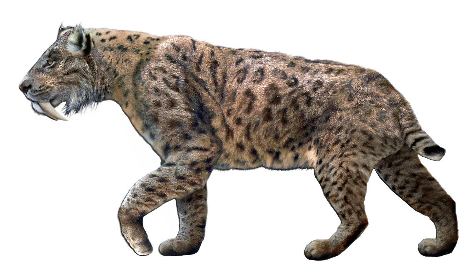 Top Ten Animales Extintos Hace Millones De Anos Es el animal más recientemente extinto en esta lista. animales extintos hace millones de