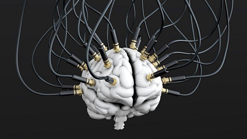 Cerebro chimpancé