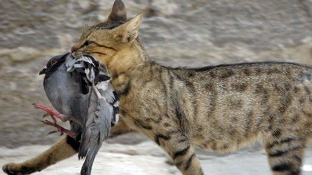 gato cazando pájaro