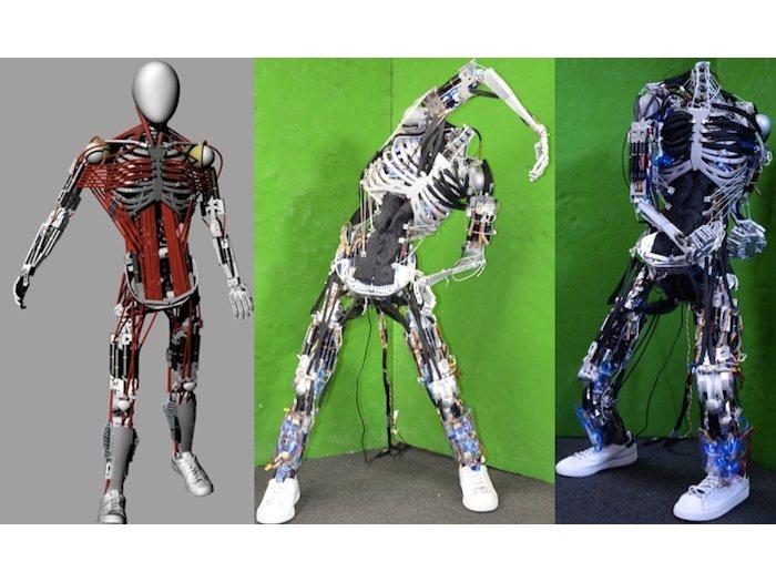 Kenshiro: El robot más musculoso del mundo (vídeo)