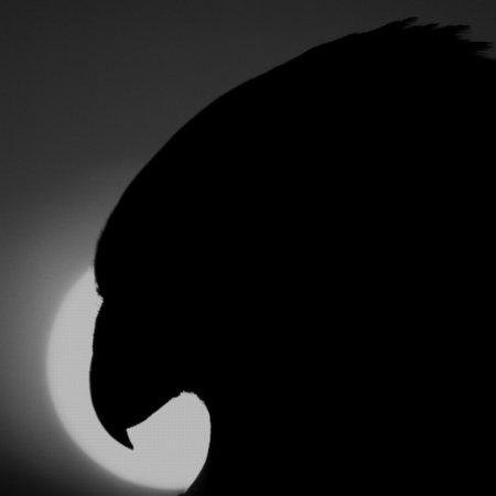 Carbon: el cliente de Twitter que esperaban (casi) todos