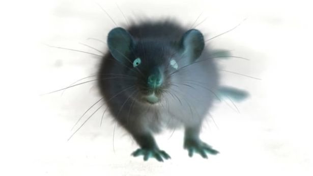 Visión infrarroja para ratas (vídeo)