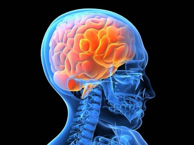 100 millones de dólares para entender el cerebro humano