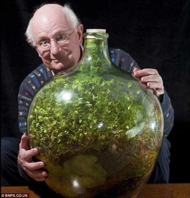 Un jardín de 53 años dentro de una botella