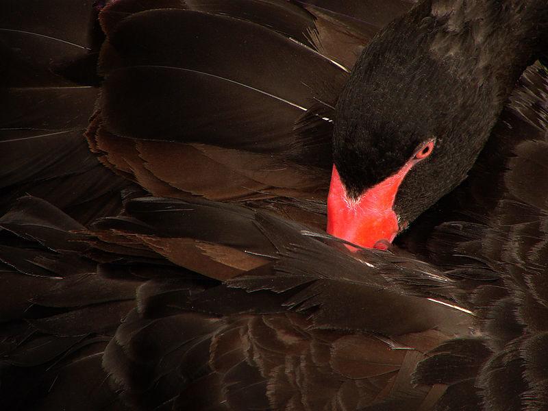 Teoría del Cisne Negro