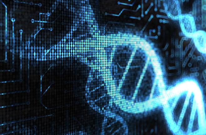 El ordenador biológico más complejo