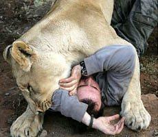 Un humano entre leones