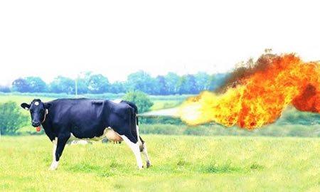 flatulencias de 90 vacas  causan un incendio en Alemania