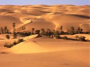 Waterboxx: Bosques en el desierto