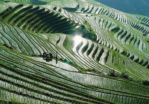 Terrazas De Las Etnias Chinas Yi Y Hani Neoteo