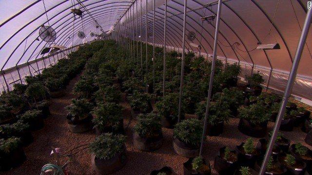 El cannabis medicinal ha sido aprobado en varios estados de EEUU y en otros países del mundo.