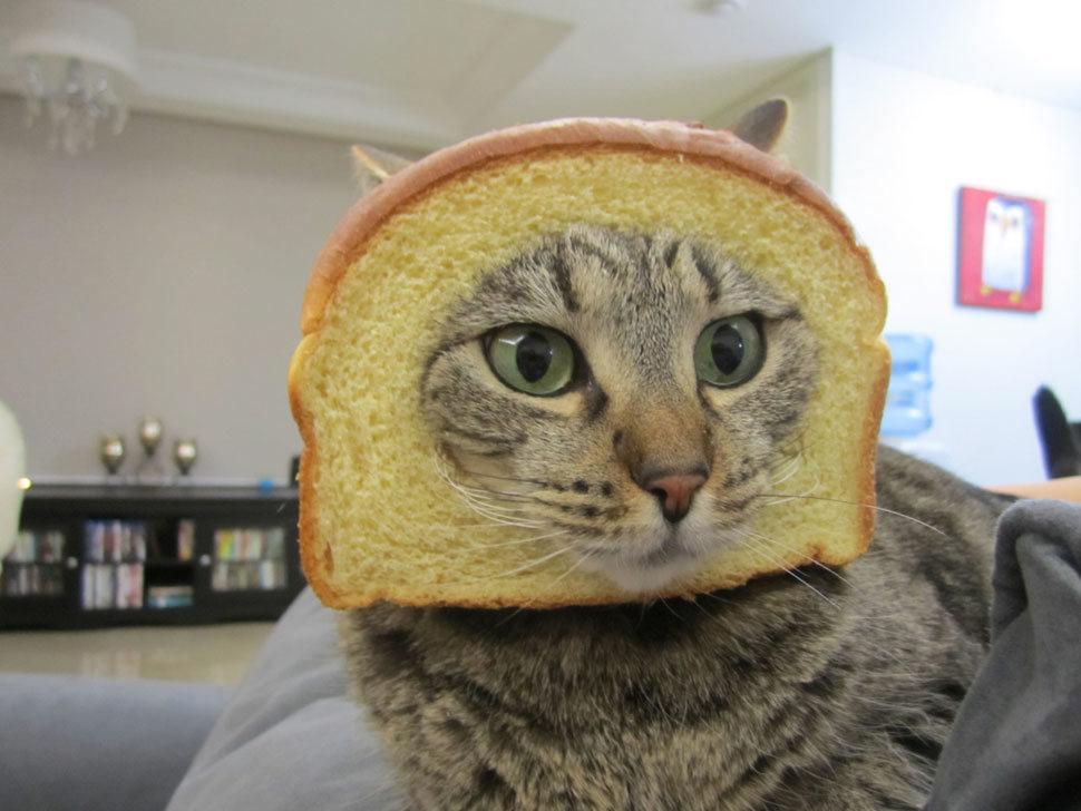 breadingcats
