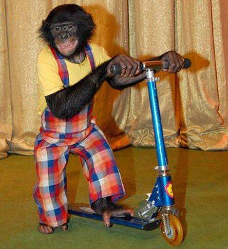 The Wisemen Monkey Dance