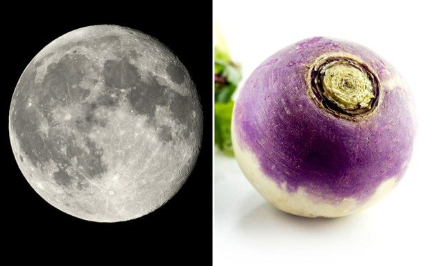 moon-turnip_2750104b
