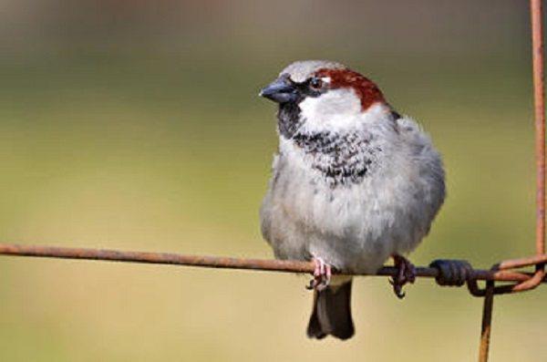 Por qué los pájaros cantan cada vez más temprano