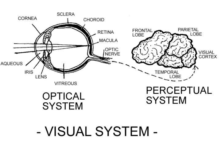 Sistema de visión