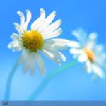 Botón de Windows 7 en Windows 8