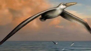 Descubren al ave voladora más grande de la historia