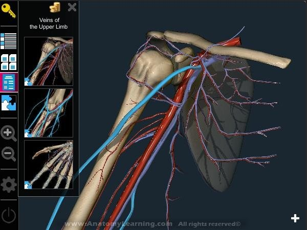 Anatomy learning 3d