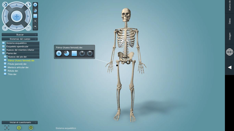 Anatronica: Anatomía humana en 3D - NeoTeo