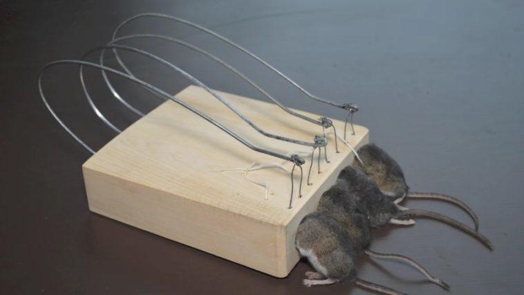 Mousetrap Monday: Un canal que muestra en funcionamiento las trampas ...