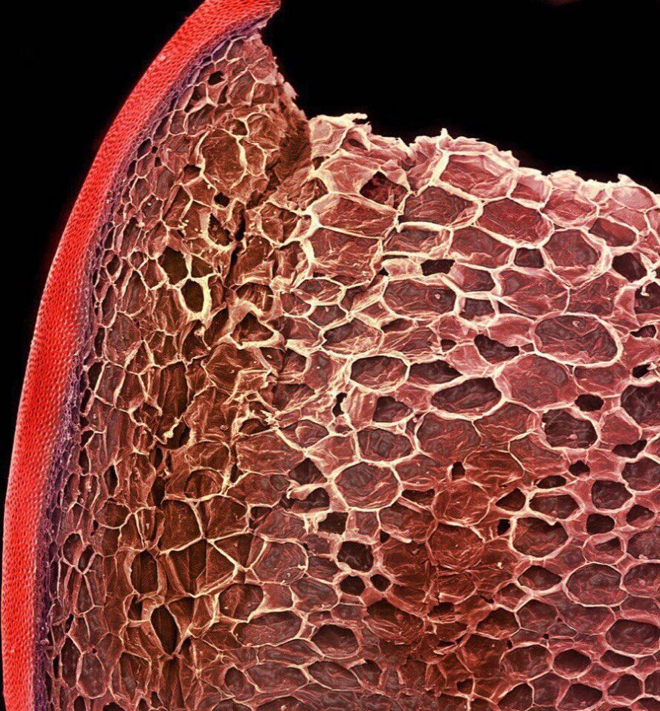 cosas bajo el microscopio