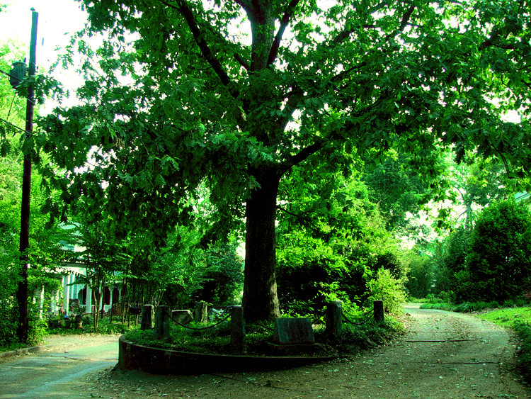 Árbol Que Se Pertenece A Sí Mismo