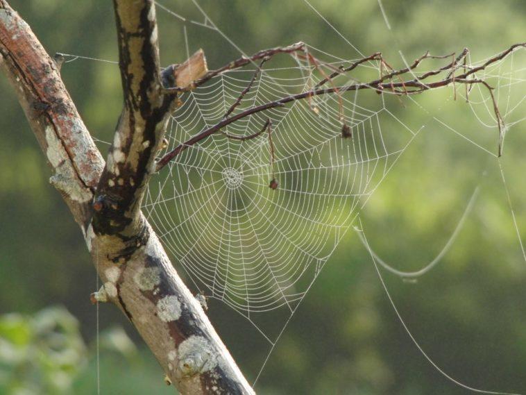 seda de araña