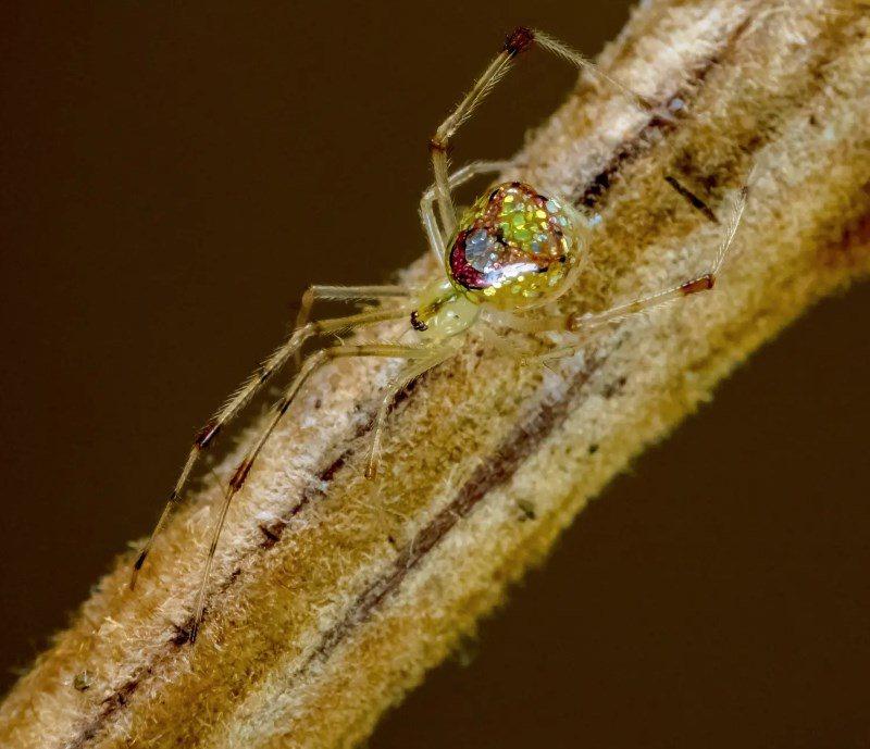 Las arañas más bellas del mundo