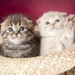 vídeos de gatitos