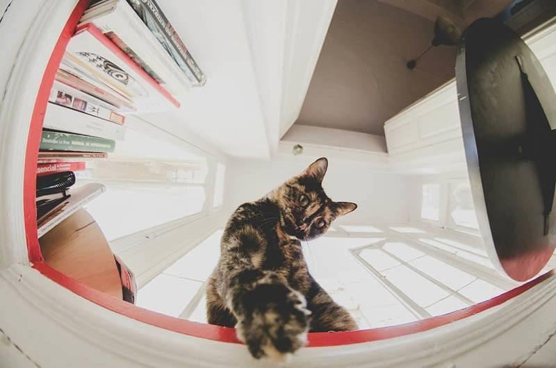 Gato y ojo de pez :3