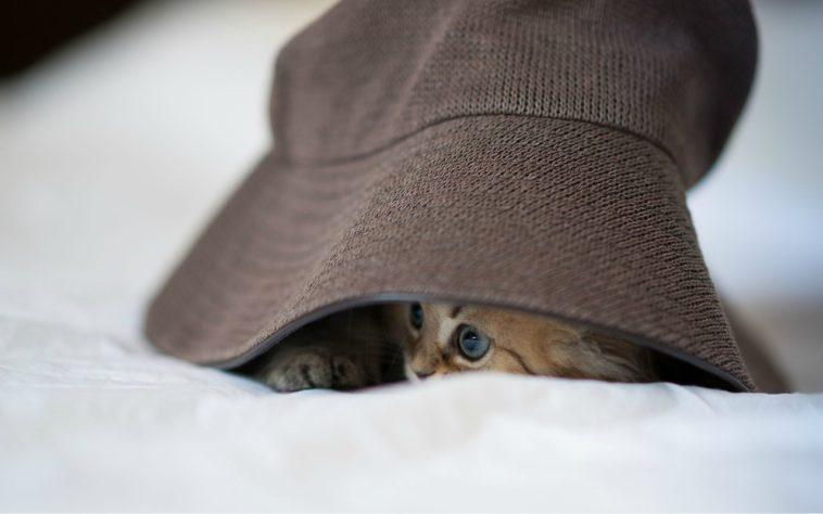 El gato y los sombreros