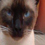 Foto del perfil de Cama_esta